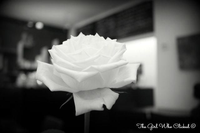 A Rose 2