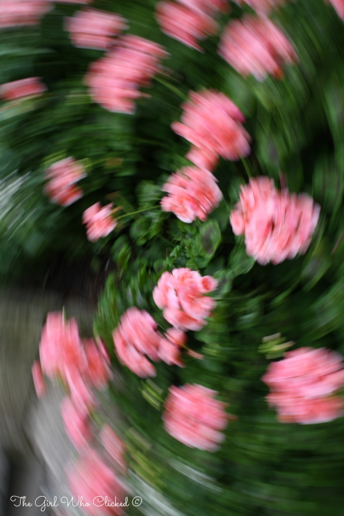 Flower In Motion 2(2)