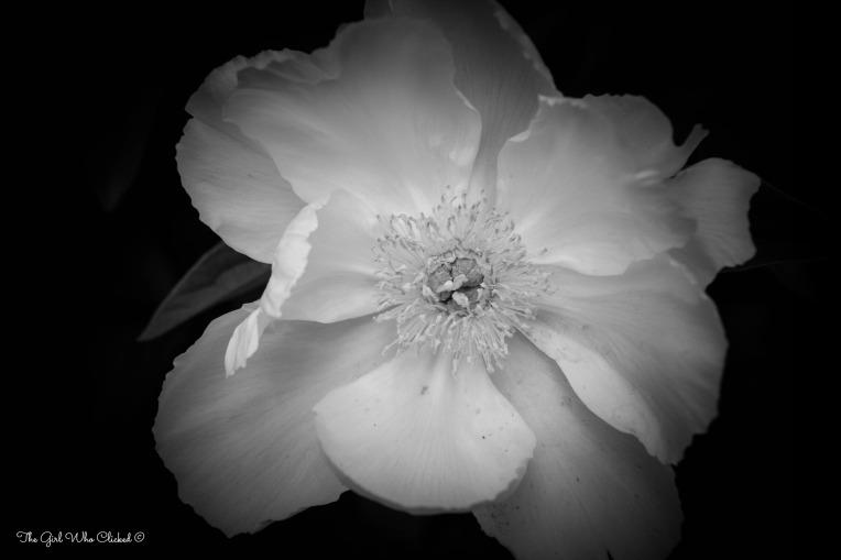 Botanical Flower 1